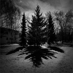 kuusix (Olli Keklinen) Tags: trees bw photoshop suomi finland dark square helsinki nikon scenery shadows six d800 malmi 2016 ok6 ollik 20160427 work4074