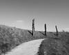 | l i (Mark-F) Tags: bw grass mono three path mark sony dslr freeman markf markfreeman sonya300 markymarkf
