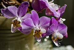 Orchids & Bokeh (Donald.Gallagher) Tags: red plants white orchid flower nature yellow spring purple bokeh cropped typecloseup