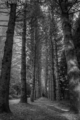 IMG_6086_7_8_tonemapped (newbs216) Tags: autumn trees landscape hdr mtwilson
