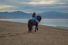 Malaga (Pieter Mooij) Tags: horse beach strand spain andalucia andalusia plage malaga blackhorse torremolinos spanje paard