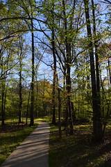 DSC_0981 (julian jones (arkansas)) Tags: travel trees plants sunlight green history nature leaves lines curves perspective shapes ground places trail arkansas height aboretum photowalking