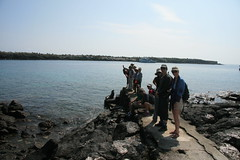 IMG_7656 (chupalo) Tags: sealions lavarocks islasplaza