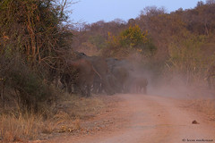 Just before sundown (leendert3) Tags: ngc africanelephants sunrays5