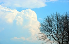 Tree and Sky (imageClear) Tags: blue tree bird nature clouds landscape fly big aperture nikon flickr simple photostream bif 80400mm wideopen d600 imageclear