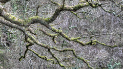 160416Lanark2479tmw (GeoJuice) Tags: scotland geography lanark clydevalley fallsofclyde geojuice