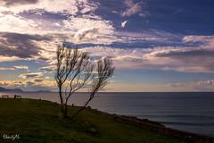 Barrika (sunsetpic.img) Tags: paisajes arbol bizkaia euskalherria basquecountry paysbasque pasvasco barrika uribekosta