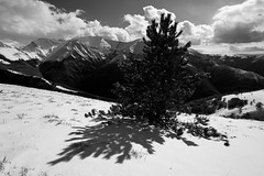 Ombra sull'ultima neve (luca_pictures) Tags: shadow bw italy sunlight snow mountains cold tree nature outdoor branches april marche sibillini sassotetto