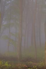 IMG_3465 (ZoRRaW photography) Tags: mist tree fog forest spring luxembourg neuhausgen
