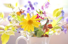 A Little Spring Posy (paulapics2) Tags: flowers macro floral bluebells spring flora pretty bright blumen depthoffield h whitebackground daisy canon5d highkey colourful cheerful arrangement posy frhling forgetmenots