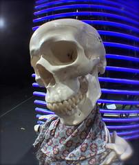 Selfie (Renato Morselli) Tags: portrait music set skeleton teatro skull opera theatre stage bologna backstage ritratto autoscatto teschio selfie anatomia ossa rossini lirica modello scheletro ilbarbieredisiviglia teatrocomunaledibologna