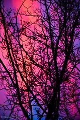 Human Soul #49 (TrojanHorsePictures) Tags: winter nature colors sunrise hike soul