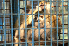 Prison Life - XI (Rafee Mizan Khan Chowdhury Niloy) Tags: people nature canon garden botanical zoo wildlife photowalk dhaka mirpur 70d