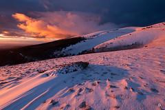 Crest the rooster (Laurent J. ZL) Tags: sunset snow biosphere paca neige provence vaucluse ventoux 2016 montventoux serein laurentjzl laurentjouffre loeildelaurent