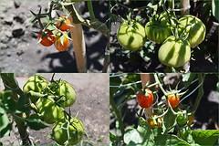 Verduras   Vegetables (Juan Enrique Gilardi) Tags: verduras vegetables orchard huerta