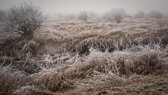tapestry (1 of 1) (DavidGuscottPhotography) Tags: morning winter cold frost