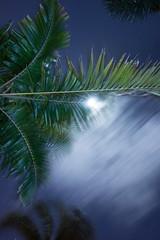palm & moon (Beau Finley) Tags: longexposure moon tree night stpetersburg florida palm saintpetersburg stpete atnight 2016 beaufinley saintpete sonydscrx100
