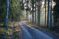 A misty November morning in forest (Salmi recreation area, Vihti, 20151129) (RainoL) Tags: road november winter mist fog forest finland geotagged fin uusimaa 2015 nyland salmi vihti vichtis 201511 salmenulkoilualue salmirecreationarea 20151129 geo:lat=6036038767 geo:lon=2450262752