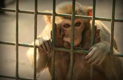 Prison Life - IX (Rafee Mizan Khan Chowdhury Niloy) Tags: people nature canon garden botanical zoo wildlife photowalk dhaka mirpur 70d