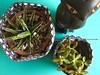 Preto & branco (Carol Grilo • FofysFactory®) Tags: brasil cacti garden succulent handmade jardin craft carolgrilo fabric jardim cachepot fofysfactory cachepo cachefofys