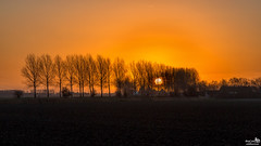 Polder Sunrise (BraCom (Bram)) Tags: trees sun house mist holland netherlands fog sunrise canon landscape bomen farm widescreen nederland silhouettes nl huis dijk polder 169 zon dike landschap boerderij middelharnis zuidholland goereeoverflakkee southholland zonsopkomst canonef24105mm silhoeutten bracom canoneos5dmkiii