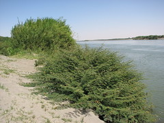 IMG_4213 (motazabdelazeem   ) Tags: sudan rivernile     northernsudan    alkarafab