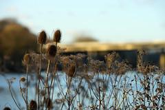 Iserlohn Seilersee (Seiler-Ralf) Tags: wasser natur pflanzen brcke seen iserlohn 58636 seilersee
