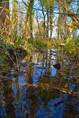 Reflecting Stream (Travis Pictures) Tags: trees photoshop woodland woods nikon lincolnshire bourne fenland lincs d5200 southkesteven