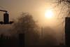 Nature's TV: Golden (Cobra_11) Tags: morning winter light sky sun tree sunrise canon licht himmel sonne sonnenaufgang canoneos morgen baum ef50mmf18ii ef50mm118ii canoneos450d digitalrebelxsi