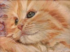 Ginger Kitten (Plumkin) Tags: pet cute fur ginger eyes kitten sweet whiskers pussycat mog plumovelgonne