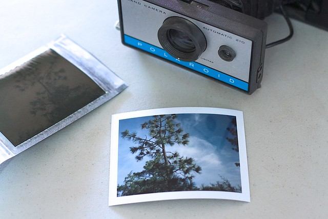My First Decent Polaroid Since Fixing the Camera Battery