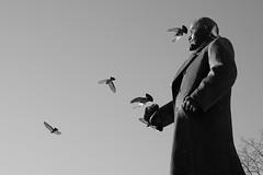 flight (nVa17) Tags: street lenin winter blackandwhite bw monument blackwhite russia pigeon pigeons flight streetphotography streetphoto february perm bnw blackandwhitephotography
