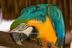 NE_ilheus0017 (Visit Brasil) Tags: horizontal brasil fauna natureza bahia nordeste detalhe ilheus ilhus interna semgente diurna