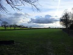 Daresbury Lane, Daresbury - field (ell brown) Tags: greatbritain trees england tree field village cheshire unitedkingdom daresbury halton daresburylane daresburyvillage daresburyconservationarea daresburyln
