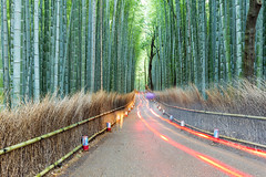 Bamboo groves at Arashiyama, Kyoto | Japan (Pola Damonte) Tags: road wood travel light sunset plant tree green nature beautiful beauty japan vertical forest fence garden landscape asian japanese spring kyoto asia natural image grove path background famous pablo landmark scene bamboo step arashiyama zen backgrounds destination prefecture footpath idyllic pola sagano lighttrail destinations kyotocity bamboogrove bambooplant famousplace beautyinnature beautifulplace kyotoprefecture damonte ornamentalgarden landscapeformat pathsinglelaneroad wallpapertopicsbackgrounds movementactivitymovingactivity idyllicatmosphereidyllic