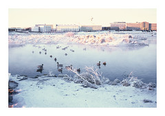 LostinRVK (magnus.fagernes) Tags: rollei iceland reykjavik velvia velvia100 rvp rollei35 fujivelvia fujivelvia100