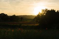 DSC04592 (wheelsy1) Tags: walking derbyshire poppy chesterfield sheepbridge poppyfield unstone richardwiles