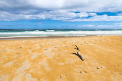 Pointing to White Island (Stefan Nikoloff - Photography) Tags: new wood blue sky seascape beautiful yellow clouds log nikon waves driftwood zealand d750 otago dunedin serene waterscape 2470mm