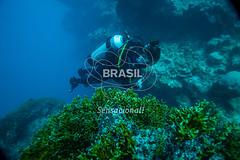 NE_Abrolhos0022 (Visit Brasil) Tags: horizontal brasil natureza mergulho bahia esporte nordeste aventura externa abrolhos subaqutica comgente diurna