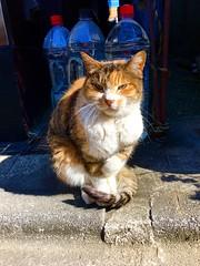 (yuki_alm_misa) Tags: cat