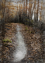 TIMSHEL (extremely fickle) Tags: fall nature photoshop path walk fallcolors indiana hike bestill