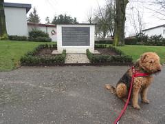 2016-0091 (schuttermajoor) Tags: nederland hond che eijsden 2016 airedaleterrier ommetjenederland