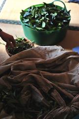 Kyobancha handprocess, tea leaves (Obubu Tea) Tags: kansai japanesetea wazuka handprocess obubu kyobancha