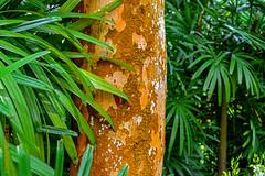 Singapore (Edi Bähler) Tags: hotpick natur pflanze singapore singapur nature plant nikond800