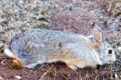 Stretch (Flickr Goot) Tags: light rabbit canon eos high dynamic telephoto february range hdr highdynamicrange available 2016 tonemapped tonemap 60d
