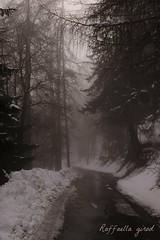 Atmosfera (Raffaella_Girod_filla) Tags: natura neve nebbia paesaggio bosco valledaosta raffaellagirod
