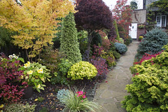 Upper garden pathway in autumn (Four Seasons Garden) Tags: york uk flowers blue autumn red england colour green english leaves yellow stone garden four japanese maple seasons award foliage national begonia paving deciduous winning walsall 2015 yorkstone acers