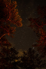 Pine Barrens Stars (McKinnon99879) Tags: new camping trees nature pine night stars landscape woods jersey barrens