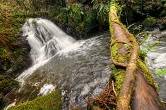 Fervenzas da Rexedoria (_Mato_) Tags: agua bosque cataratas curtis entornos efectoseda puroarte