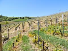 Primavera nelle Langhe (gabriferreri) Tags: trekking la wine hiking hills vigne barbaresco vino colline barolo langhe nordicwalking morra camminare roero roddi verduno camminatanordica dumacanduma